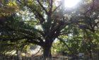 Healthy Soil, Healthy Trees
